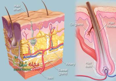 چگونه فولیکول مو را تقویت کنیم