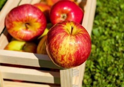 لاغری با خوردن سیب