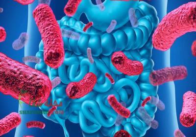 تقویت روحیه با مصرف پروبیوتیک ها